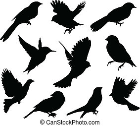 set, birds., vector