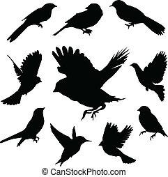 set, birds.vector