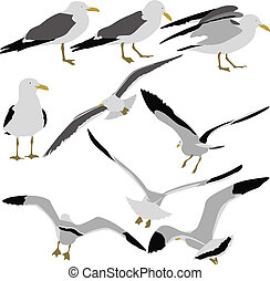 Set black silhouettes of seagulls on white background....