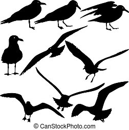 Set black silhouettes of seagulls on white background. Vector il