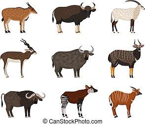set., blackbuck, africano, eland, caracteres, oriental, bongo, scimitar-horned, okapi, búfalo, fauna, oryxm, agua, nyala, gaur