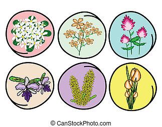set, bloem, illustratie, orchidee