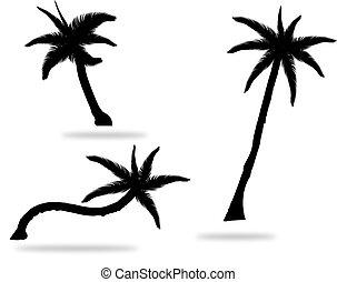 set, boompje, vrijstaand, illustratie, silhouettes, vector, palm, achtergrond, witte