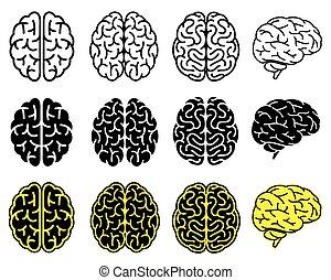 set, brains., menselijk