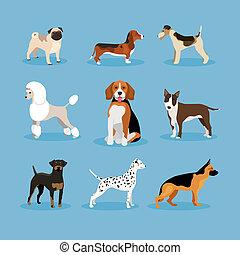 set, cani