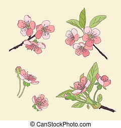 Set-cherry blossoms. Blooming cherry. spring flowers. Drawing. Vector Illustration .Eps 10.
