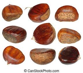 Set chestnut isolated on white