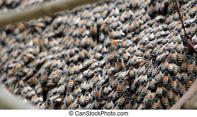 close up of honey bees