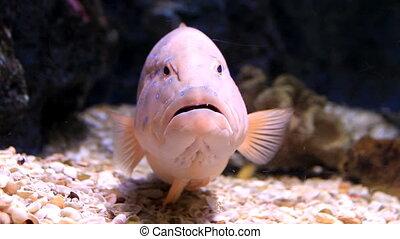 fish in aquarium - Set collection montage, fish in aquarium