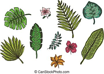 set, colorito, foglie, tropicale, luminoso, fiori