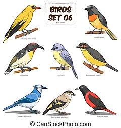 set, colorito, illustrazione, cartone animato, vettore, uccello