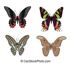 set, colorito, scarabocchiare, mano, farfalle, disegnato