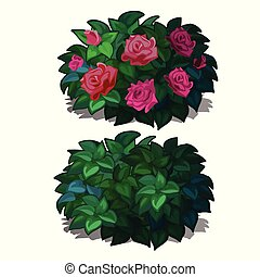 Set compact rounded shrubs with flowers roses isolated on white background. Flowering plants for furnishing of landscape design. Vector illustration.
