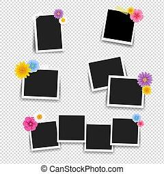 set, cornice foto, fondo, grande, fiori, trasparente