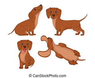 Set dachshund dog, cheerful friend, pet, lie down, run and have fun. Vector in cartoon style