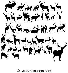 set, deers