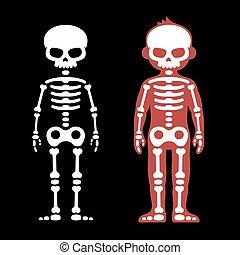 set., dessin animé, vecteur, humain, os, style., squelettes
