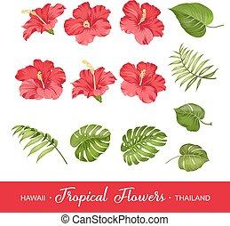 set, di, fiori tropicali, elementi