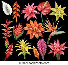 set, di, fiori tropicali