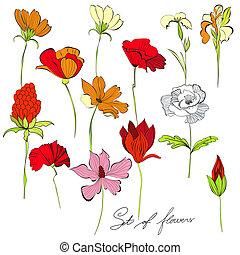 set, di, fiori
