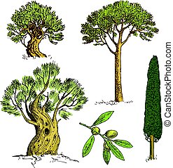 set, di, mano, disegnato, albero, italiano, cipresso, e, pietra, pino, pinea, oliva, isolato, vettore, illustrazione, inciso, simboli, di, sud, sempreverde