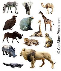 set, dieren, afrikaan