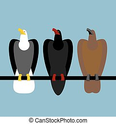 Set eagles birds of prey. Quick Bald eagle with white head. Big Hawk with large beak. Ferocious Falcon with claws