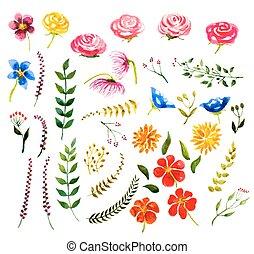 set, elements., acquarello, vettore, disegno, floreale