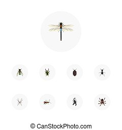 set, elements., realistisch, tarantula, spin, omvat, symbolen, ook, insect, vector, insect, kever, damselfly, objects., vlieg, anderen