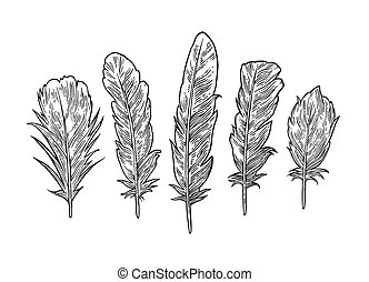 Set feathers. Vintage black vector engraving illustration. Isolated white background
