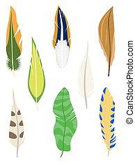 set, feathers., white., isolato