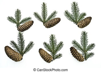 set fir tree branches with cones