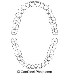Set fissures teeth, the chewing surface of teeth upper and lower jaw, dental vector illustration for print or design dental website template
