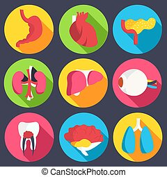 set flat human organs icons illustration concept. Vector background design
