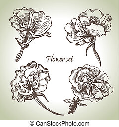 set., floral, illustraties, hand, getrokken