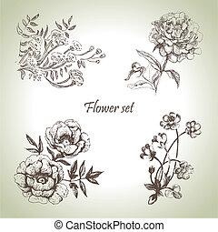 set., floral, illustrations, main, dessiné
