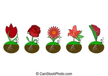 Set flower icon isolated on white background. Tulip, rose, echinacea, azalea, calla lilies in simple flat style logo.