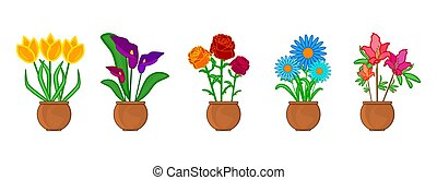 Set flower in pot isolated on white background. - Indoor and...