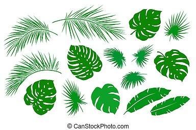 set, foglia, tropicale, palma, ramo, verde
