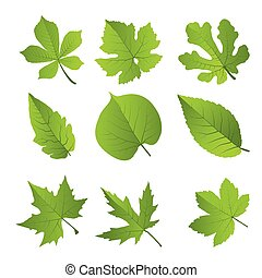 set, foglie, vettore, verde