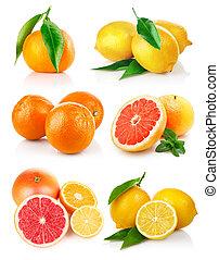 set fresh citrus fruits with cut