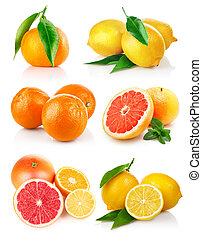 set fresh citrus fruits with cut isolated on white...