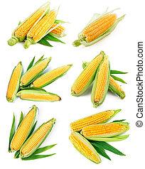 Set fresh corn with green leaf harvest