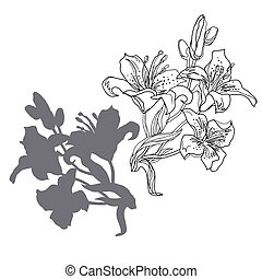 Set from monochrome freehand flowers lily isolated on white background.