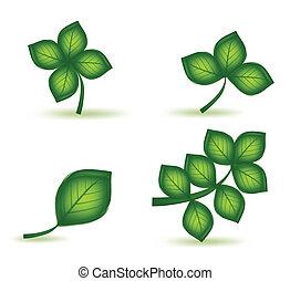 Set green leafs. Vector
