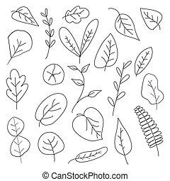 set, hand-drawn, scarabocchiare, vettore, foglie
