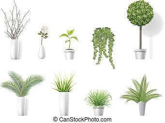 set home plants