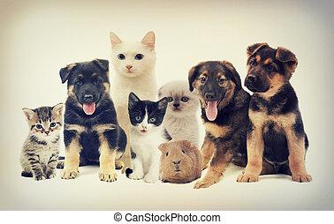 set, huisdieren