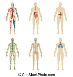 Set human organs and systems of the body vitality - Set of...