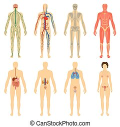 Set human organs and systems of the body vitality. - Set of...